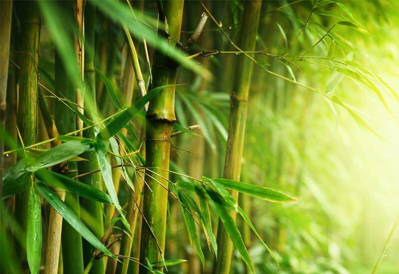 Idealna kombinacija bambusa in mikrovlaken za udobje in toploto v zimskih mesecih